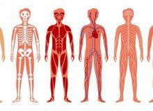 """گوگل برای بدن انسان """"گوگل مپس"""" می سازد!"""
