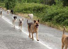 چرا سگها در ایران به طبیعت بازمیگردند؟