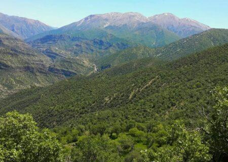 سرانه جنگل ایرانیها یک چهارم استاندارد جهانی است