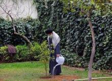 رهبر معظم انقلاب به مناسبت روز درختکاری دو نهال کاشتند