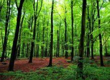 نابودی سالانه ۳۶ میلیون درخت در آمریکا