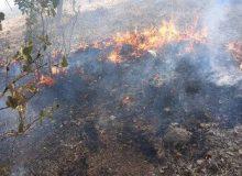 رهایی جنگلهای گچساران از شعلههای سوزان آتش