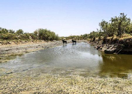 موج مهاجرت کشاورزان ایرانی به عمان